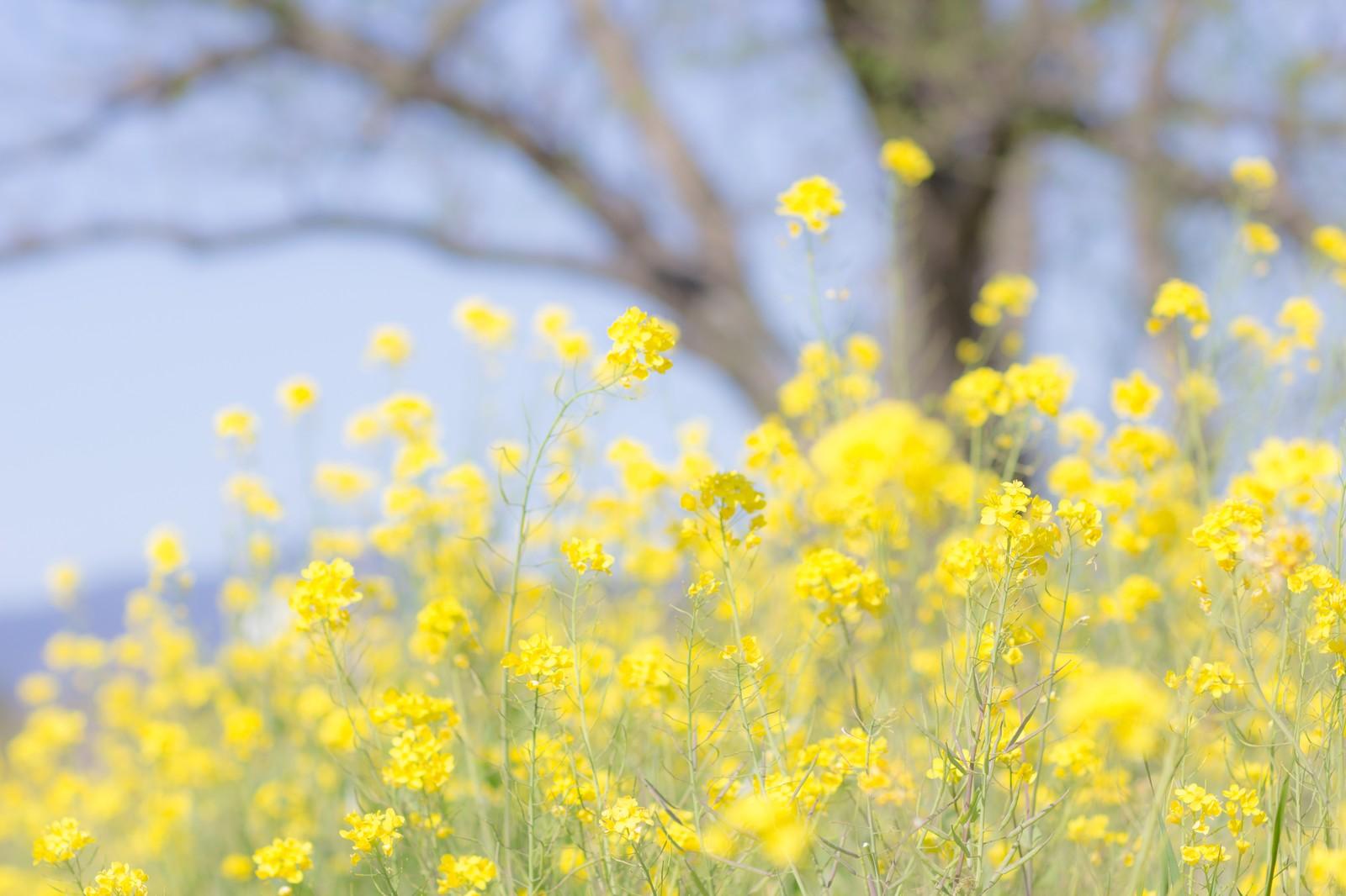 3月にスマホカメラで撮りたい被写体と九州の撮影スポット!